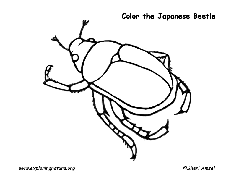 Beetle Colouring Pages (page 3)