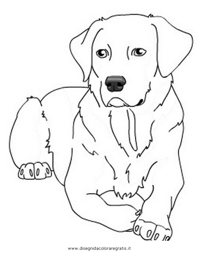 labrador retrievers coloring pages - photo#4