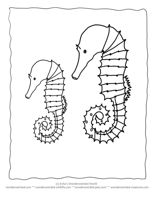 Free Seahorse Coloring Page Collection of Seahorse Pictures to Color