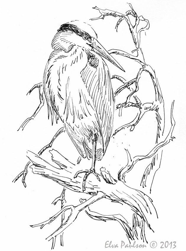 Sketching in Nature: Great Blue Heron Sketches