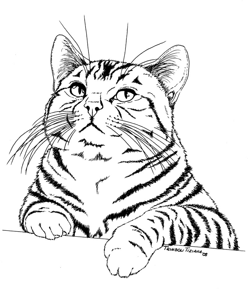 Pin Titti Gatto Silvestro Disegni Daare Coloring Pages on Pinterest