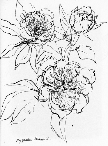 Sketching in Nature: My garden: May sketches