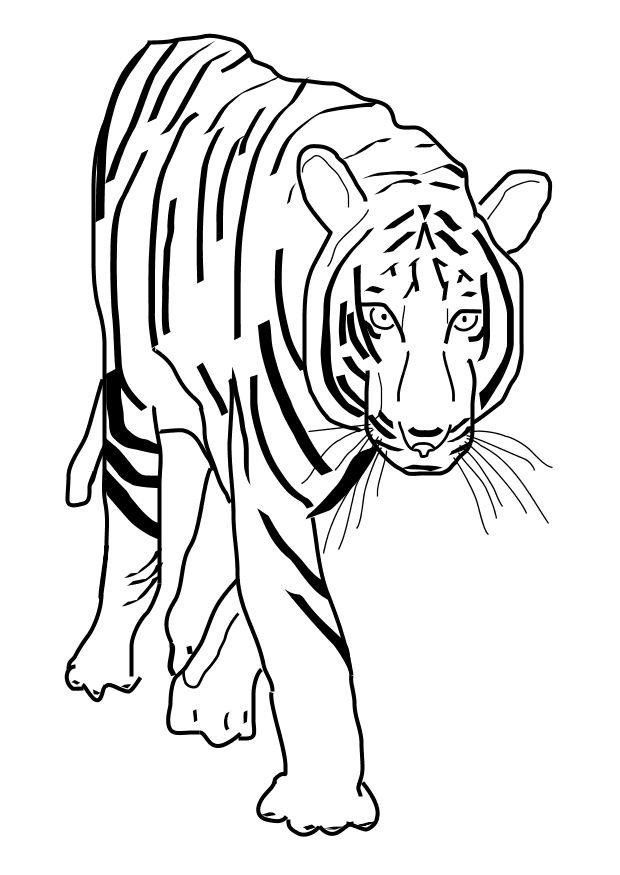 coloring pages tiger | Maria Lombardic