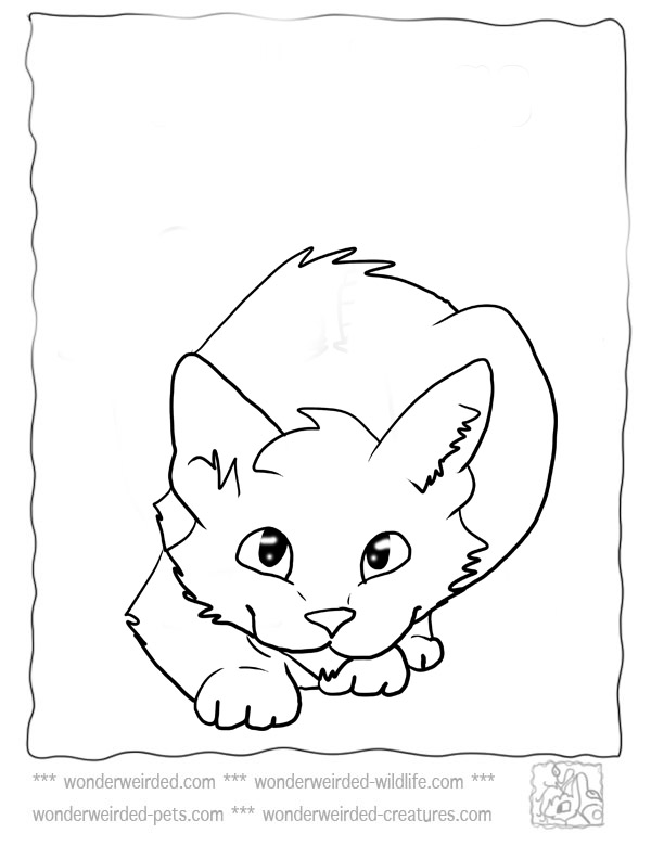 domestic cat coloring pages - photo#9