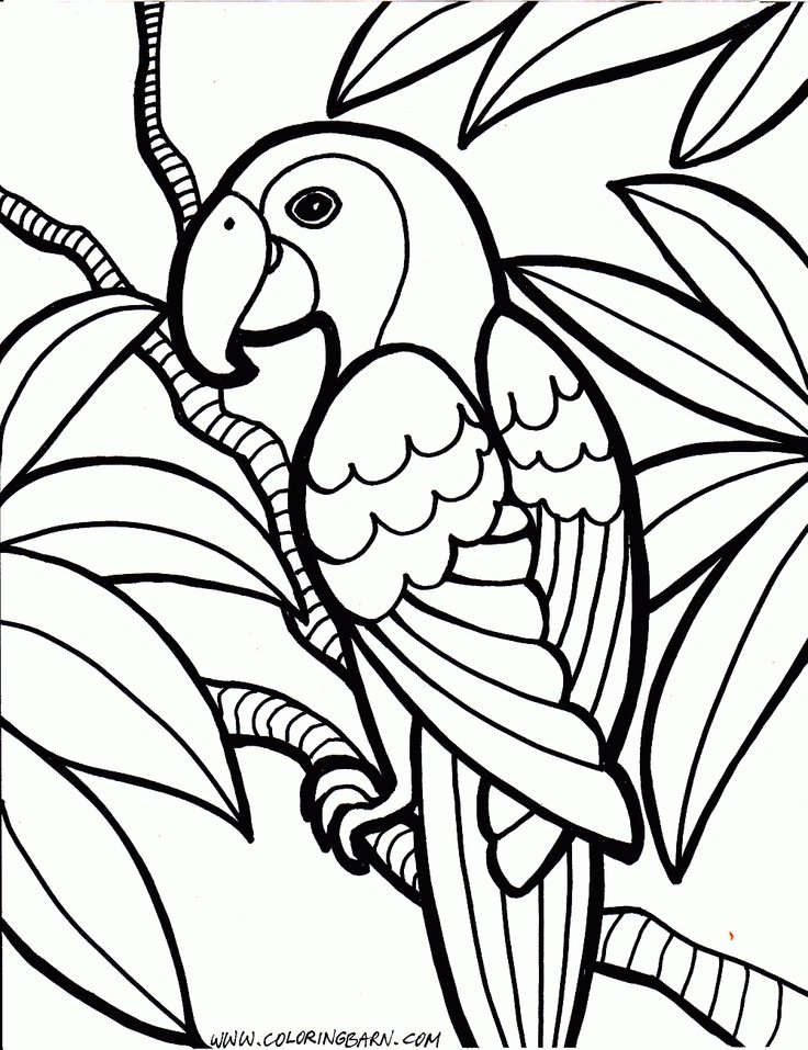 Parrot Coloring Pages | Trendvee