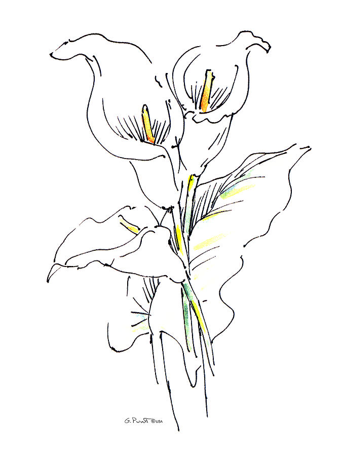Lilies Drawings for Sale