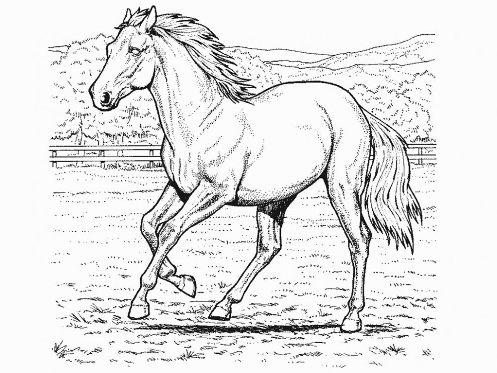 Horse Coloring Pages | Printable Coloring Pages Gallery