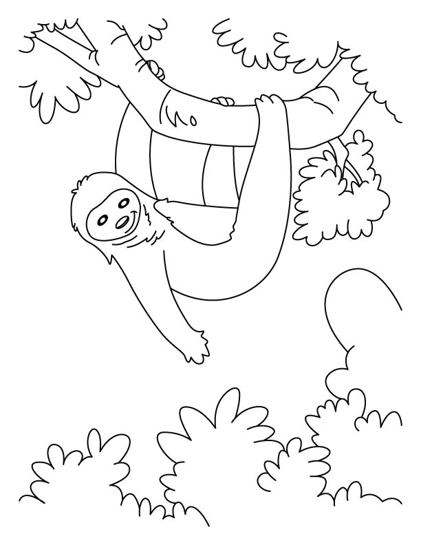Galerry sloth bear coloring page